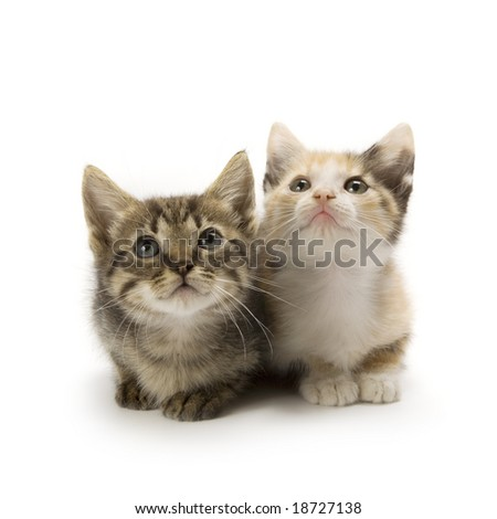 Kittens on white background