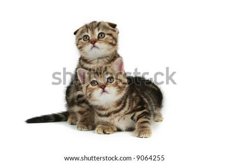 kittens on white background - stock photo