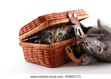Kittens play in basket