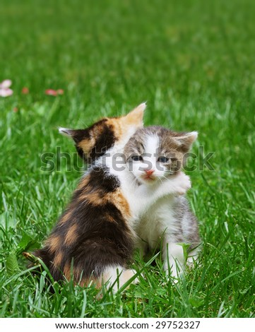 Kittens playing in the grass catch in hug like pose.