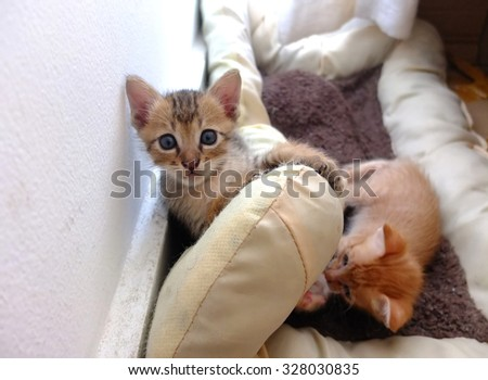 Kittens playing on cat cushion. - stock photo