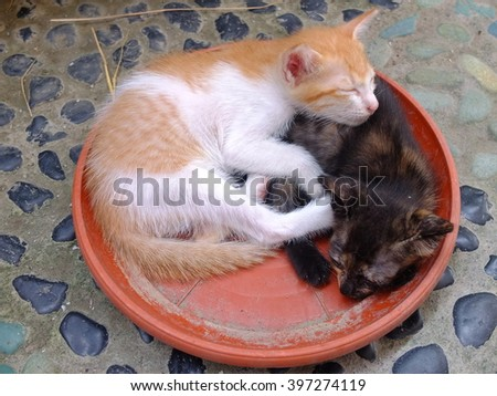 Kittens sleeping curled up in a brown plate.