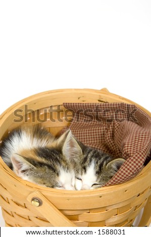 Kittens sleeping in a basket on a white background - stock photo