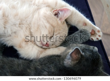 kittens sleeping together - stock photo