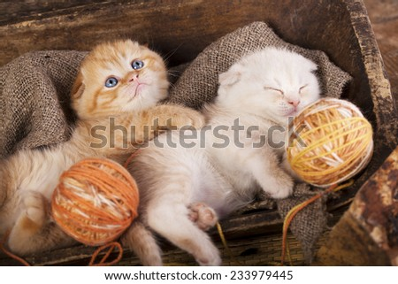 kittens sleeping with a ball of wool  - stock photo