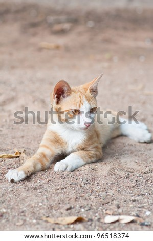 Kittens that were left behind in the temple of Thailand - stock photo