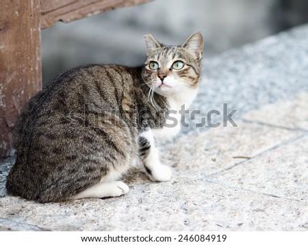 kitty - stock photo
