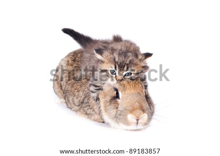 Kitty and rabbit on the white isolated - stock photo