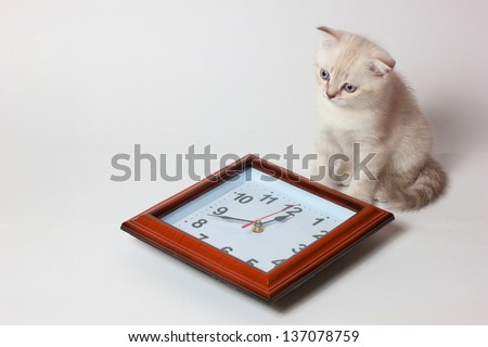 kitty and watch - stock photo