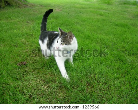 Kitty Cat - stock photo