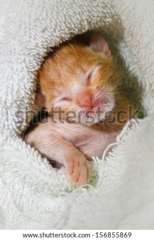 Kitty cat sleeping and dreaming - stock photo