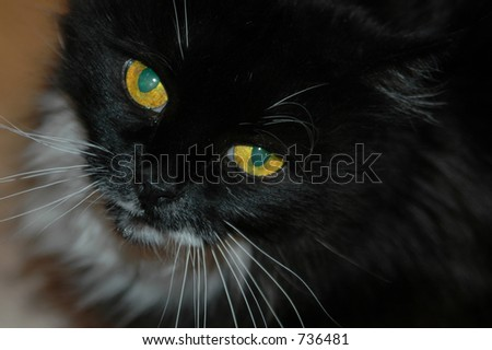 Kitty drools for her next meal - stock photo