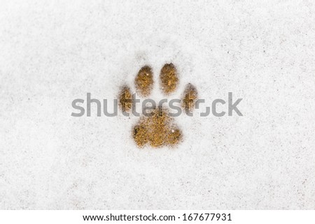 Kitty footprint in the snow - stock photo