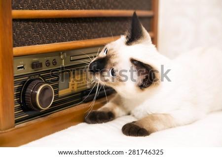Kitty is listening to the retro radio - stock photo