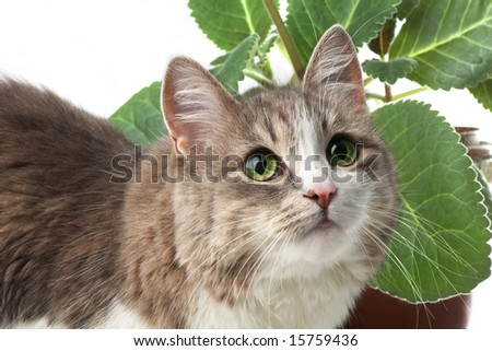 kitty isolated on white; window plant on background - stock photo