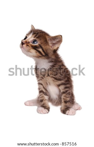 Kitty look on top 2 [clipping path] - stock photo