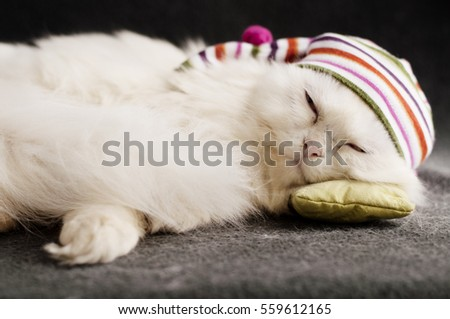 Kitty with a sleeping cap on a pillow