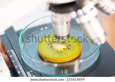 kiwi fruit in a laboratory microscope - stock photo