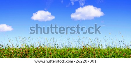 Klee flowers  meadow and blue sky. - stock photo