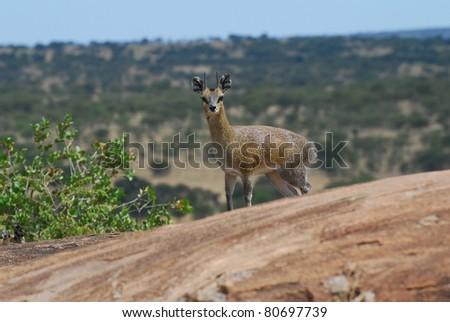 Klipspringer Lookout - stock photo