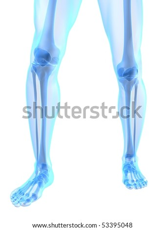 knee illustration - stock photo