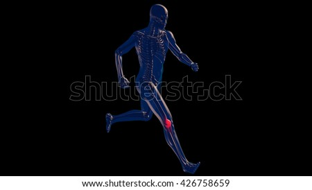 Knee Pain in Human Body Transparent Design 3D Illustration - stock photo