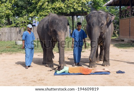 KO SAMUI, THAILAND -  December 27, Elephant show in Samui  jungle Thailand on December 27, 2013. Asian elephants are the largest living land animals in Asia. - stock photo