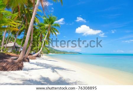 Koh Samui tropical beach and coconut palm trees - stock photo