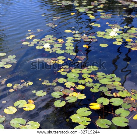 Stock images royalty free images vectors shutterstock for Surface fish ponds