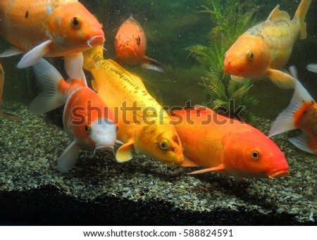 Stock images royalty free images vectors shutterstock for Baby carp for sale