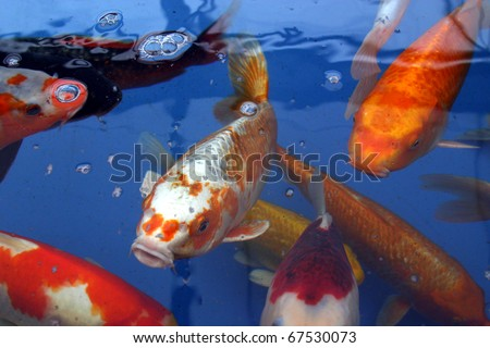 Fish pond stock photos images pictures shutterstock for Koi holding pool