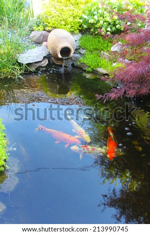 Koi fish in a small decorative pond - stock photo