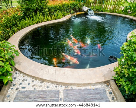 Fish pond stock images royalty free images vectors for How to make koi pond water clear