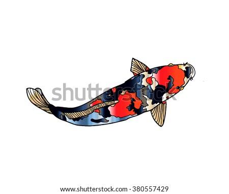 Koi Fish Isolated - stock photo