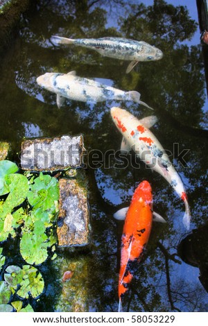 Japanese garden pond stock images royalty free images for Japanese garden san jose koi fish