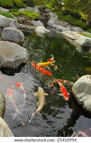 Koi pond in a Japanese garden - stock photo