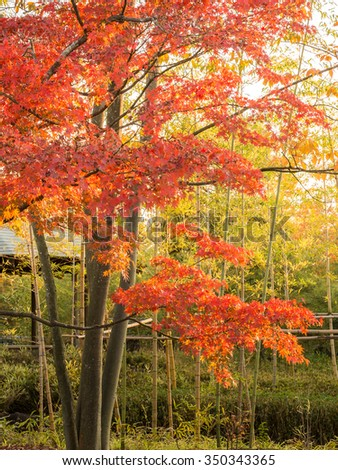 Koko-en Garden is a Japanese garden in Autumn Red Maple Leaf Foliage located next to Himeji Castle in Hyogo Prefecture, Japan. Japanese style pond with Koi, Stone Bridge - stock photo