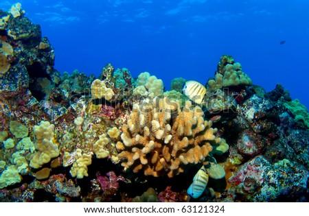 Kona Reef Scene - stock photo