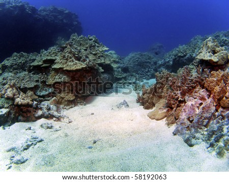 Kona Reef Scene with Copy Space and background - stock photo
