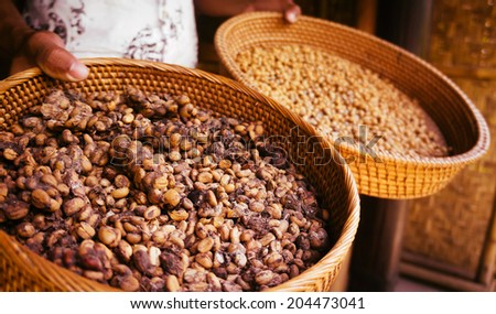 Kopi luwak - stock photo