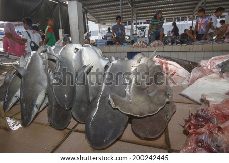 KOTA KINABALU, MALAYSIA - MAY 17 2014: Sharks at fish market. Environmental problem of trade in endangered species including Hammerhead Shark killed illegally for their fins. - stock photo