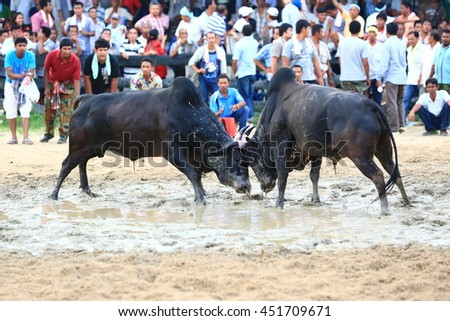 KRABI, THAILAND - November 16 : Hundreds of spectators cheer on during a cow fighting match on November 16 , 2012 in Krabi, Thailand.