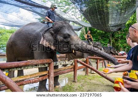 KUALA GANDAH, MALAYSIA - JANUARY 2, 2014: Tourists are feeding an elephant at Kuala Gandah Elephant Conservation Centre - stock photo