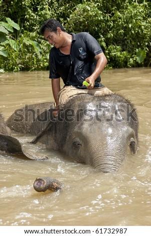 KUALA GANDAH, MALAYSIA - SEPTEMBER 25 : Staff of Kuala Gandah Elephant Orphanage Sanctuary bathing an elephant during Elephant Awareness Program September 25 2010 in Kuala Gandah, Malaysia. - stock photo