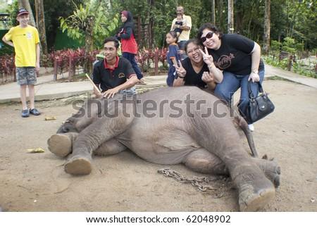 KUALA GANDAH, MALAYSIA - SEPTEMBER 25 : Visitors playing with Langsat at Kuala Gandah Elephant Orphanage Sanctuary during the Elephant Awareness Program September 25 2010 in Kuala Gandah, Malaysia. - stock photo
