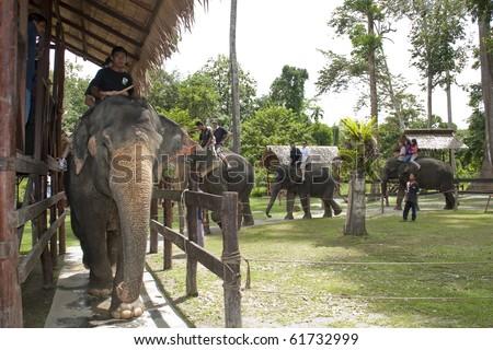 KUALA GANDAH, MALAYSIA - SEPTEMBER 25 : Visitors to Elephant Orphanage Sanctuary was treated to an elephant ride during the Elephant Awareness Program September 25 2010 in Kuala Gandah, Malaysia. - stock photo