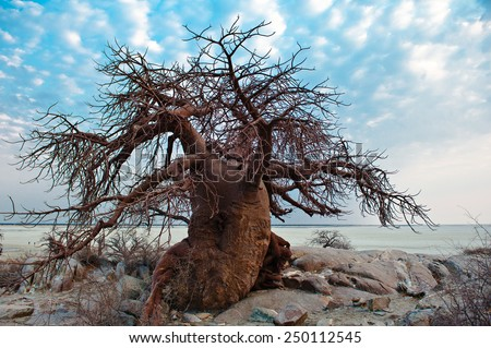 Kubu Island, Botswana, Africa - stock photo