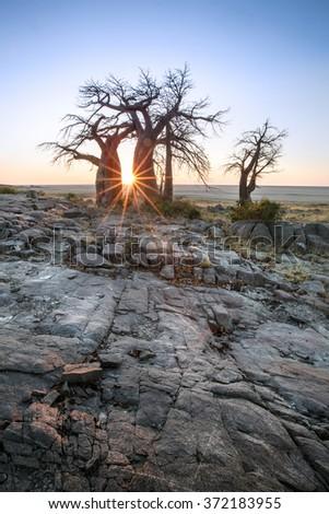 Kubu Island in Botswana - stock photo