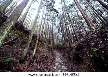 Kumano Kodo ancient pilgrim route at Kii Mountains, near Tanabe, Kansai, Japan - stock photo