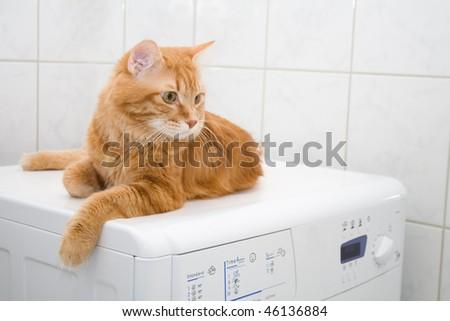 Kurilian bobtail on washing machine - stock photo
